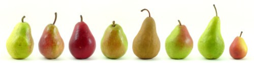 Eight_varieties_of_pears