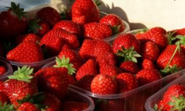 fraises-1