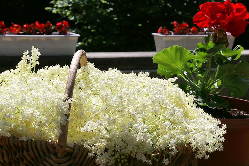vin de fleurs sureau sirop de fleurs sureau et gel e de fleurs de sureau. Black Bedroom Furniture Sets. Home Design Ideas